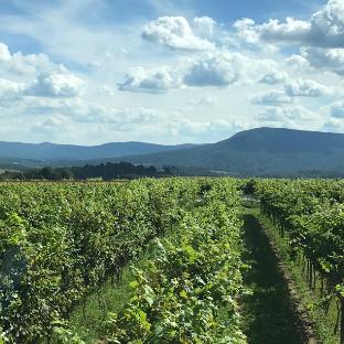 Stony Run Vineyards